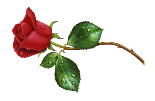 Rose Red Left
