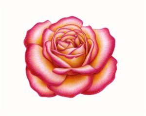 Rose Solo