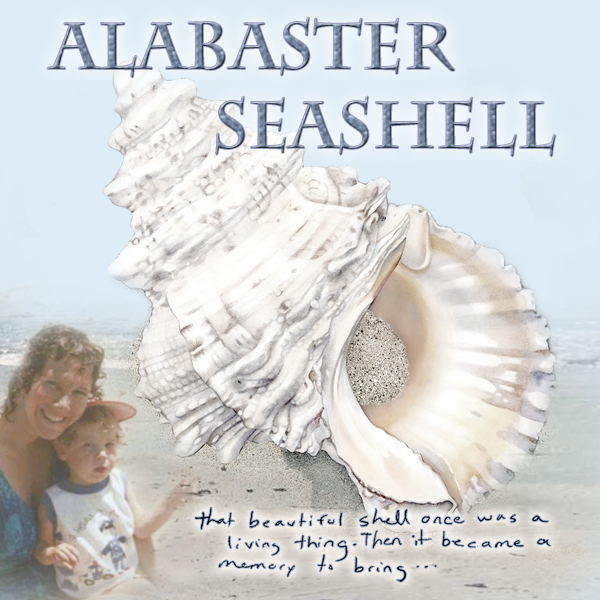 ALABASTER SEASHELL