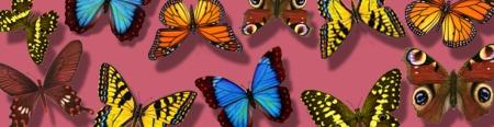 b-butterfly-medley-pink.jpg