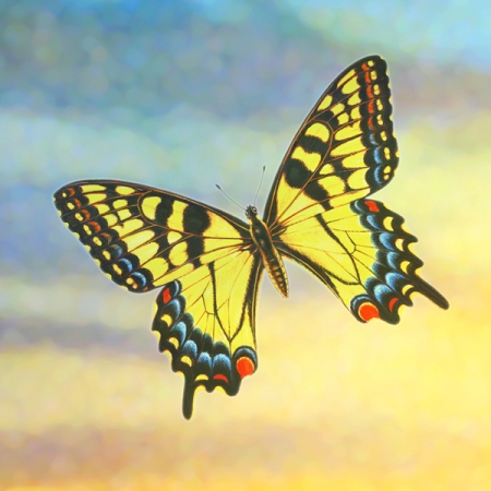 Butterfly of grief