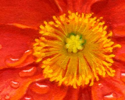 Centered flower