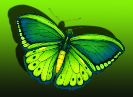 Lime green fantasy Butterfly