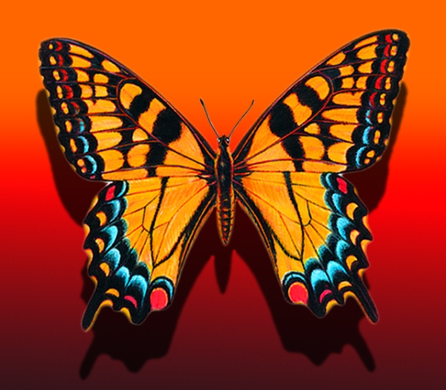 Orange & Red Fantasy Swallowtail