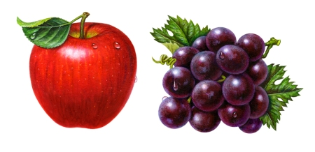 My professional fruit illustrations