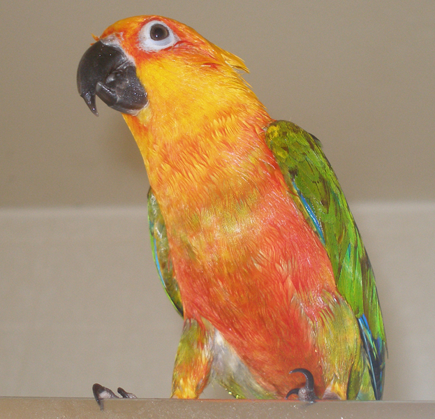 I took this picture of Tiki after our shower together.