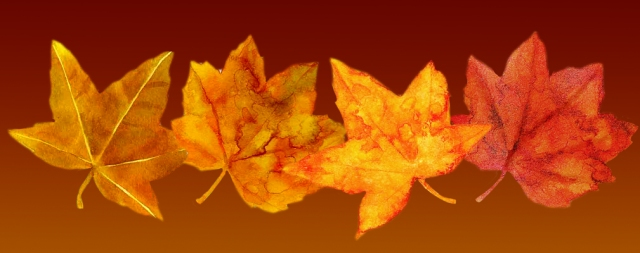 Autumn leaves always touch my heart. My child died in the fall and memories return with seasonal change.