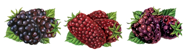 Marion Berry ideas