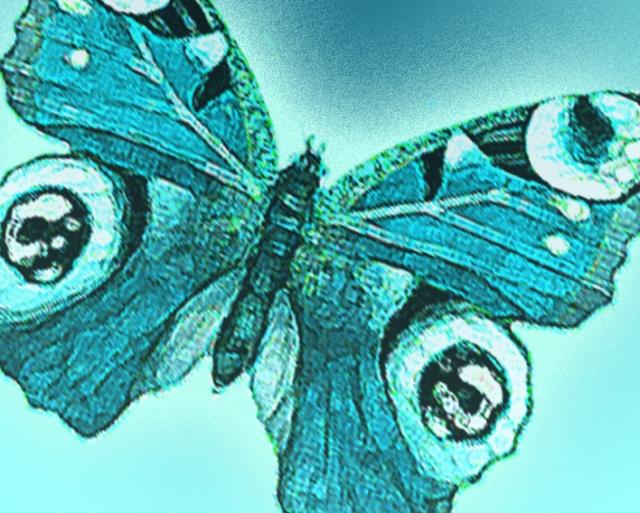 Aqua butterfly 2