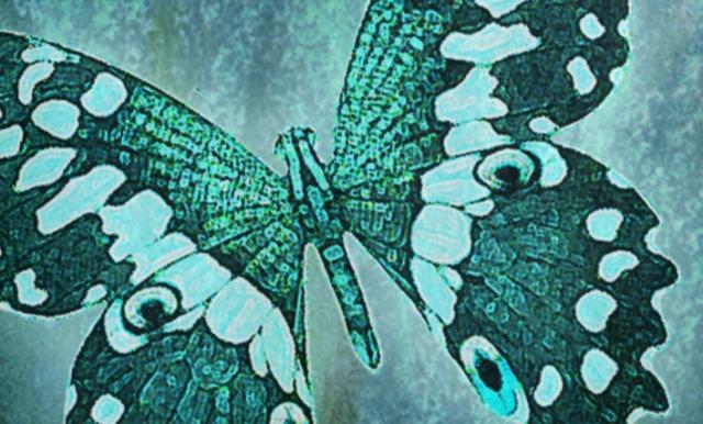 aqua butterfly 3