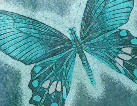 Aqua butterfly 4