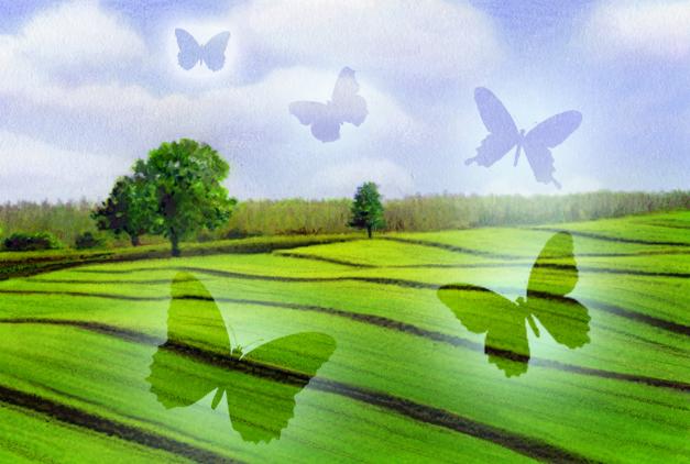 Landscape fields
