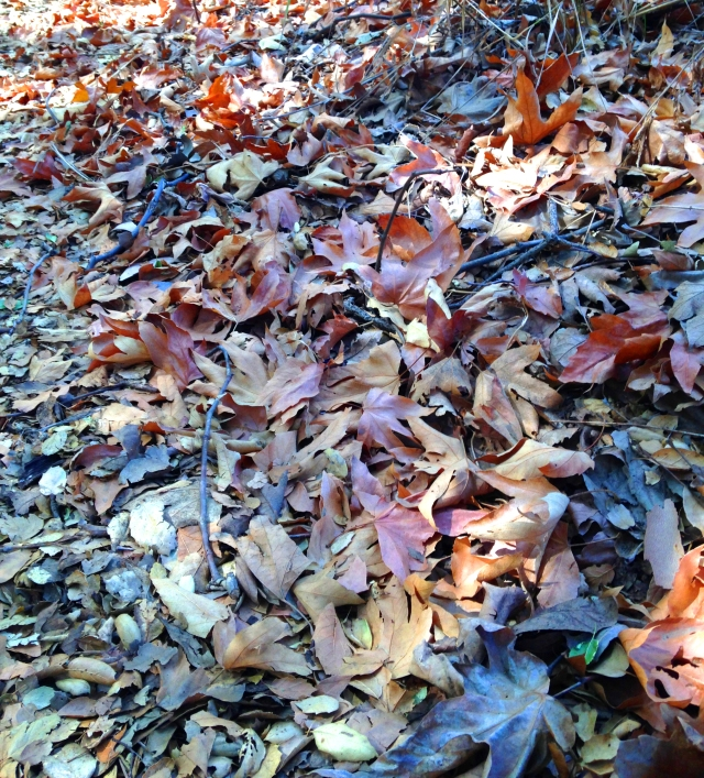 I see great beauty in this photo of leaves. There are many subtle and wonderful colors.