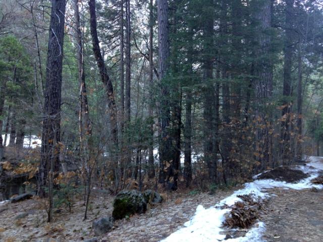 Forest landscape 4