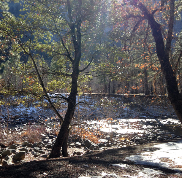 Forest landscape 5