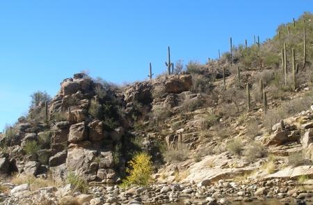 Rocks & cactus