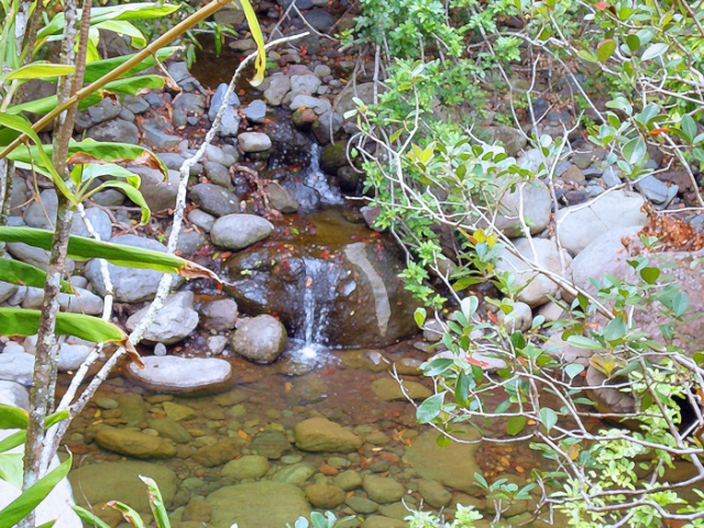 Tropical Stream 1