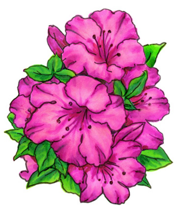 Watercolor Azaleas