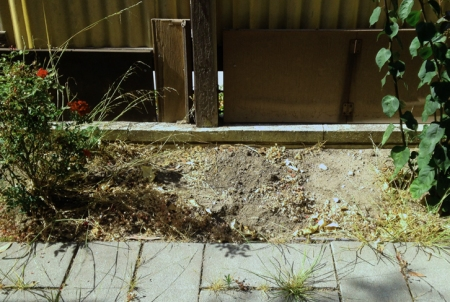 I am a song gardener only, which is clear in this picture of the current state of my backyard!