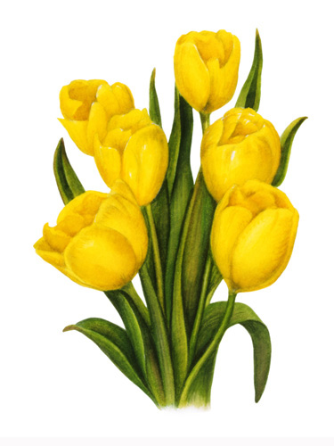 Tulips-Yellow Group