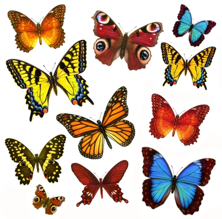 Butterflies I love