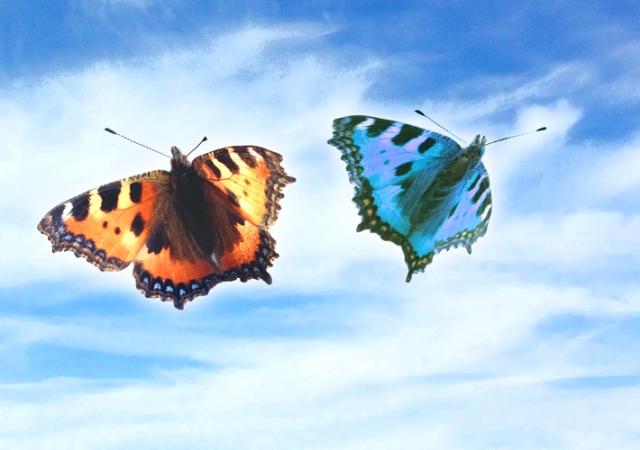 Butterflies blue sky