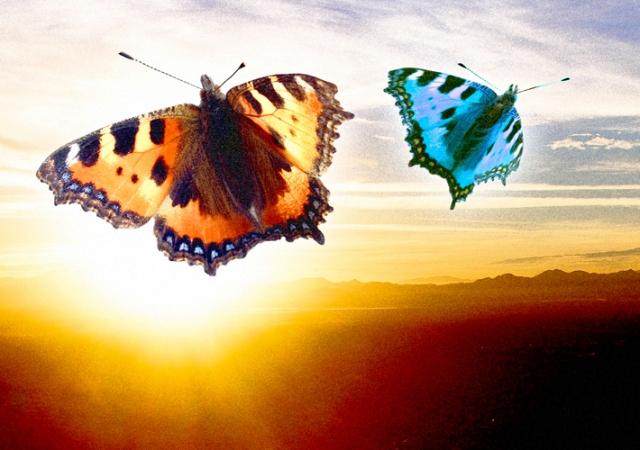 Butterfly sunset