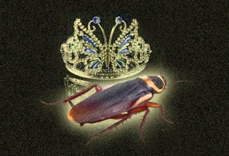 Crown & Roach