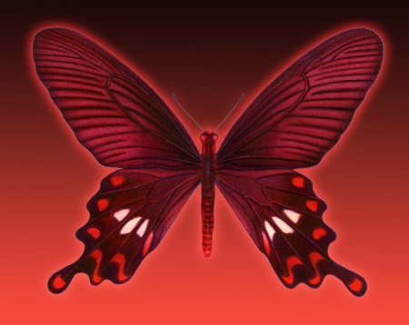 This butterfly is a Rose Swallowtail. I love to add my own artwork to stories on my blog.