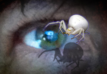 Spider and the Eye