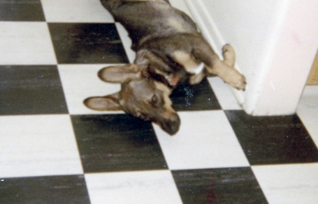 I even have a picture of my childhood dog, Teddy, enjoying that floor.