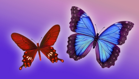 Red purple butterfly pair