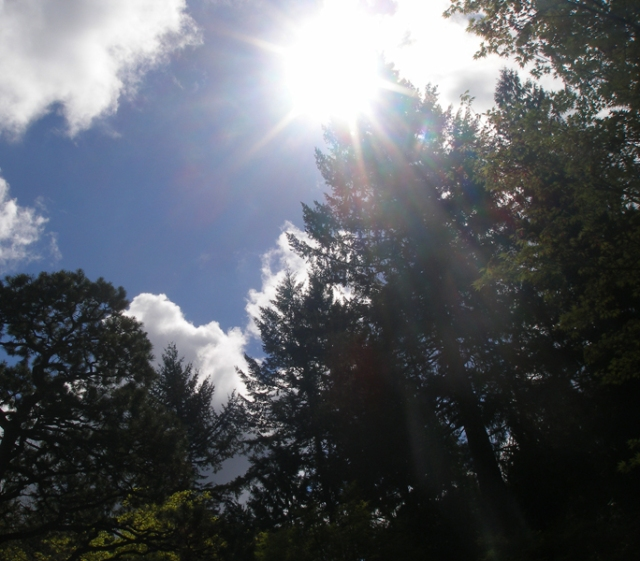 Brilliant sun