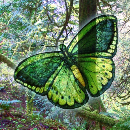 Peaceful Green Butterfly