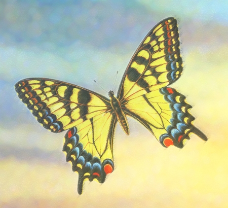 Butterfly of grief pastel