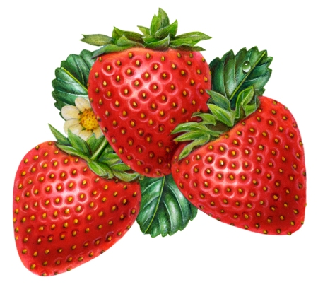 I have been very busy illustrating. In the past, I thought my career as an artist was over because my paintings were obsolete. It turns out that by reinventing my technique on a computer, I am suddenly now very much in demand. I created that strawberry illustration above recently.