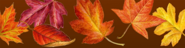 Autumn Leaves larger copy