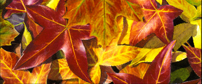 Autumn leaves watercolor copy