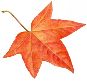 Autumn Leaf 2