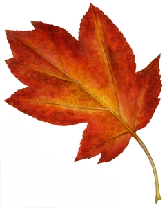 Autumn Leaf 3