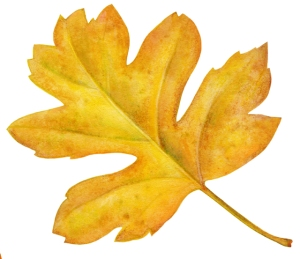 Autumn Leaf 4
