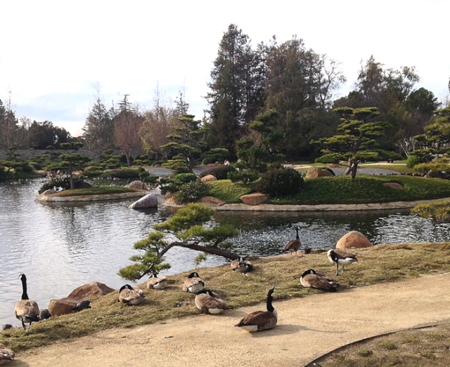 Last week, I went for a walk at a nearby Japanese Garden with my childhood buddy, Joni. We've been friends for so many years. It lifted my spirits and I enjoyed taking a few pictures so I could add them to my blog.
