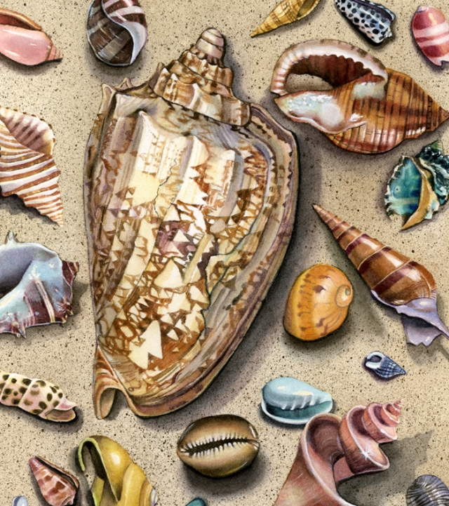 Seashells - Brown Shell