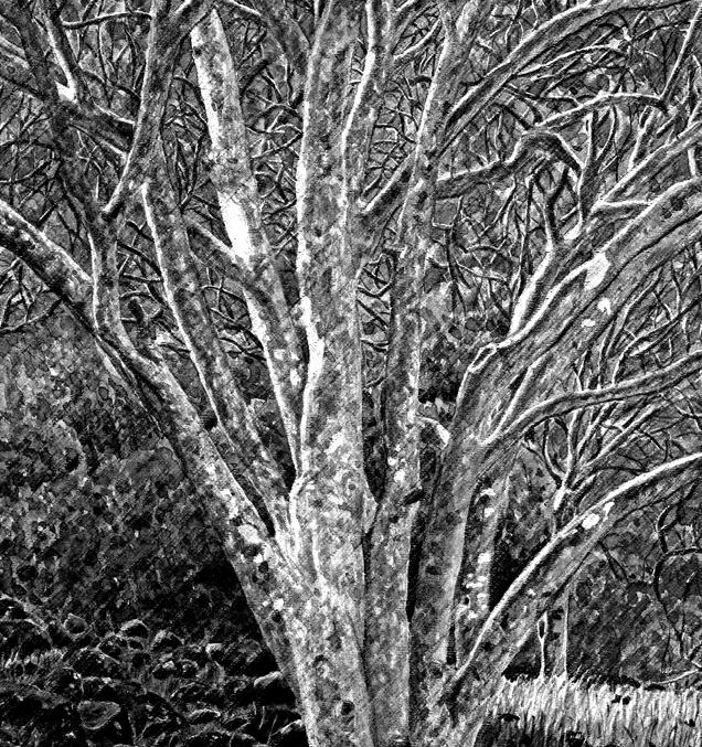 Trees w. Lichen B&W