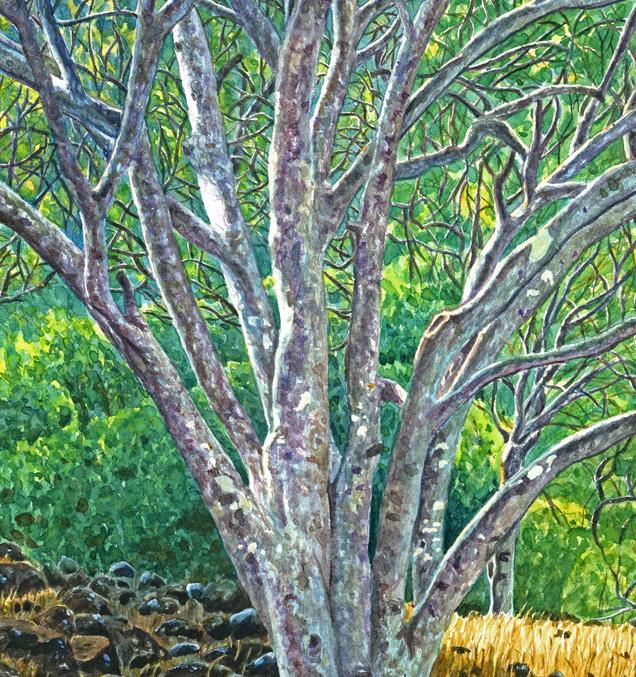 Trees w. Lichen