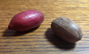 Which Pecan?
