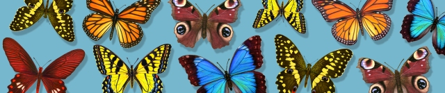 New Butterfly Header 940x198