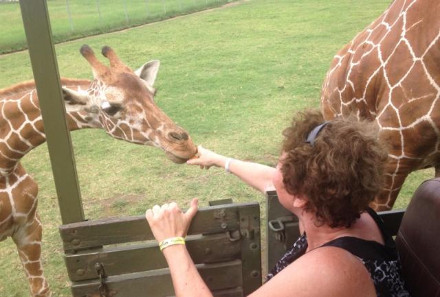 feeding-a-giraffe