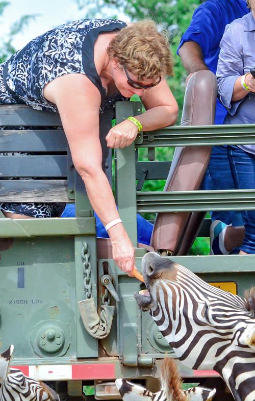 judy-feeding-a-zebra