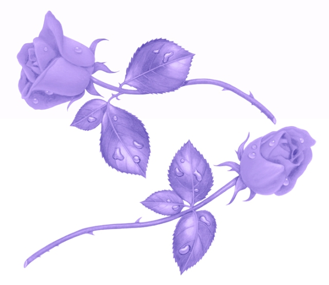 For some reason, purple roses fit well as my image to describe my memories of love. I cannot explain it.